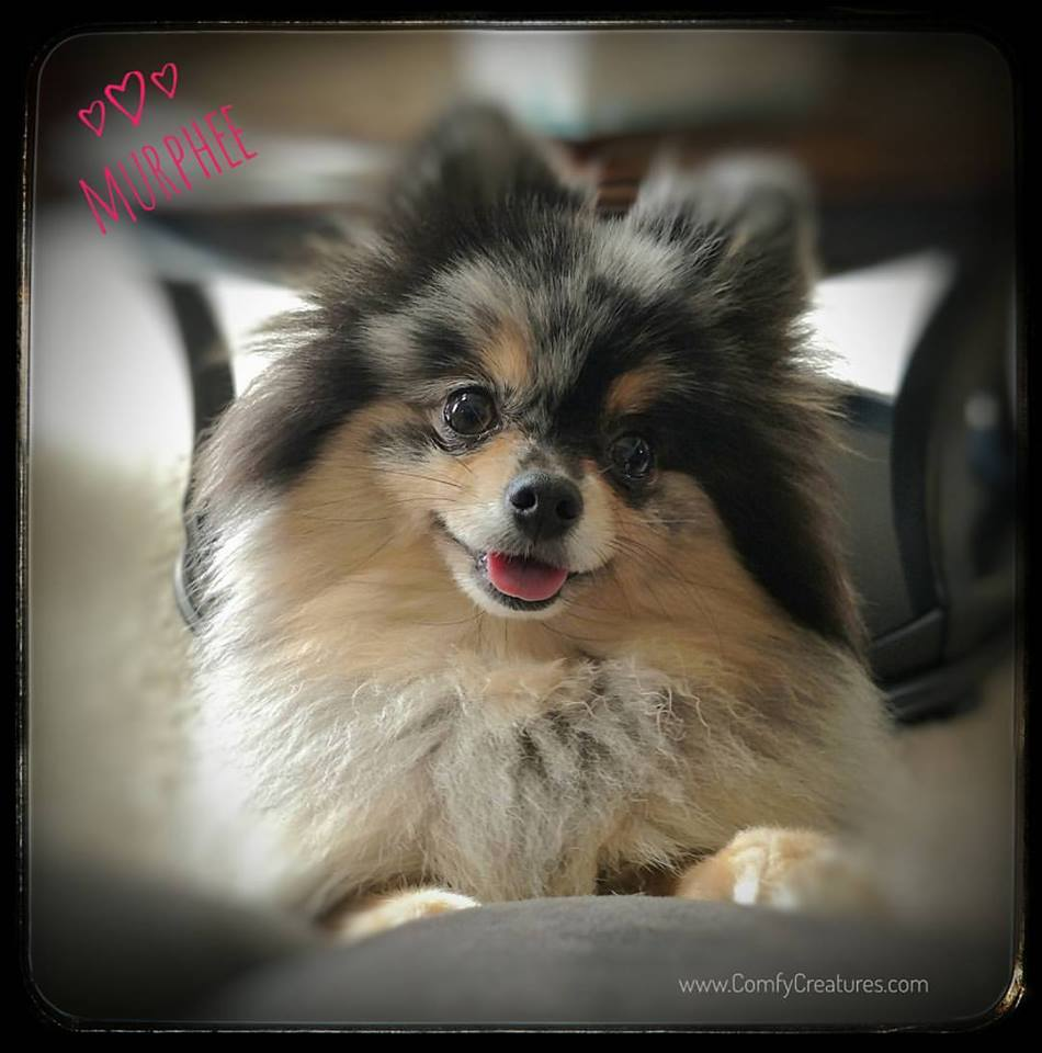 Murphee loves our pet care services