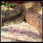 pet care for reptiles snakes
